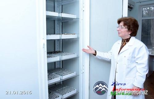 AMEA Botanika İnstitutunda innovativ layihələr həyata keçirilir