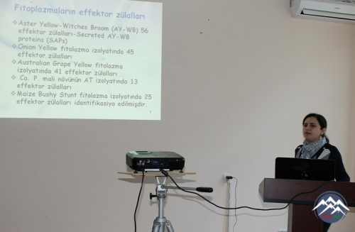 Molekulyar Biologiya və Biotexnologiyalar İnstitutunda elmi seminar keçirilib